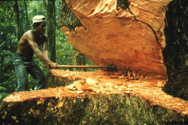 Повышение долговечности древесины